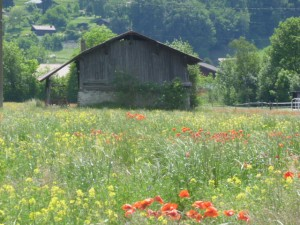 Field with wildflowers